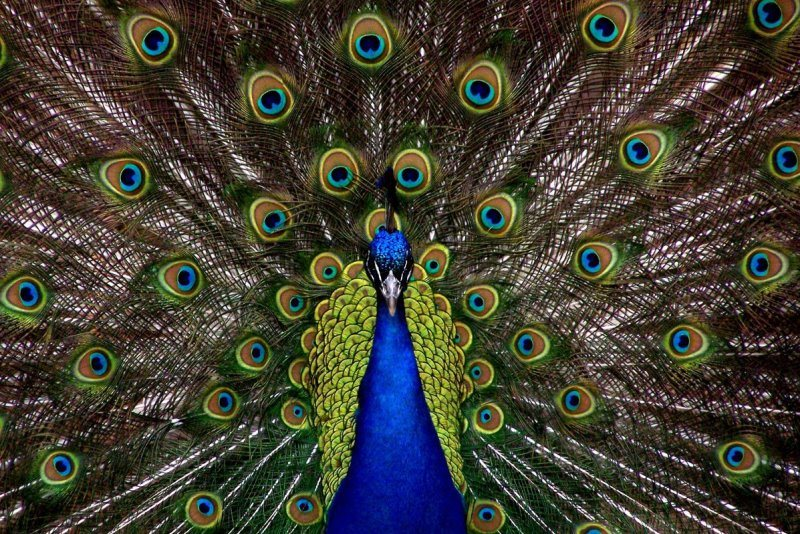 B2B PR News Story Release Peacock