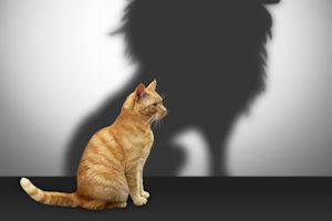 Stakeholder Research cat with shadow of lion